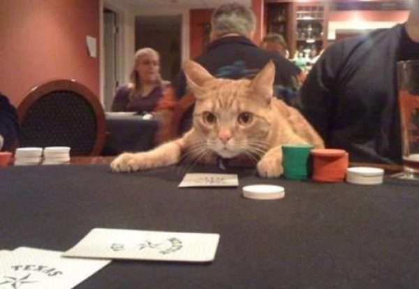 Cat Playing Cards