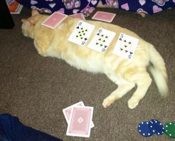 Cats Gambling