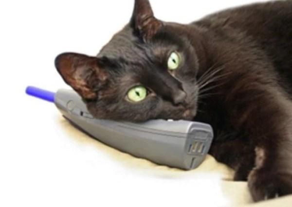 Cat using a phone