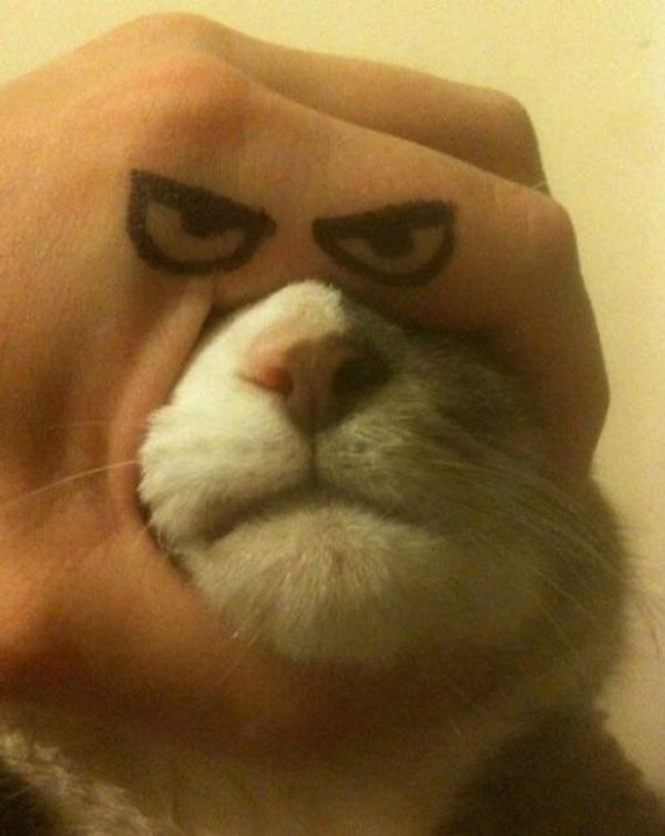 Cat With Funny Eyes Drawn on a Hand