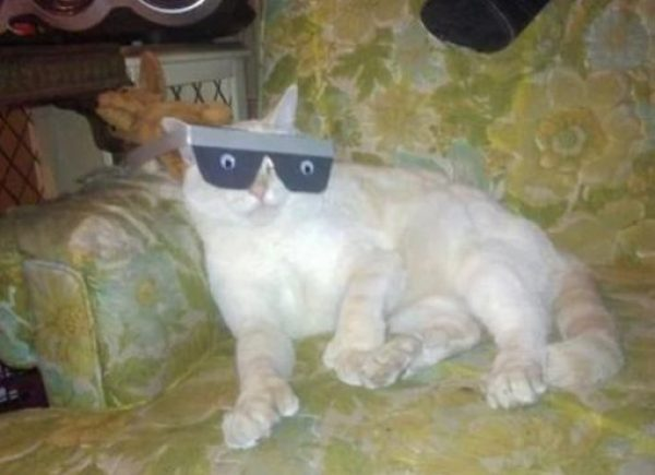 Cat With Funny Eyes On a Pair of Silly Glasses