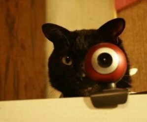 Ten Cats With Funny Eyes That Will Turn Any Frown Upside Down