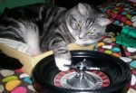 Top 10 Funny Images of Casino Cats