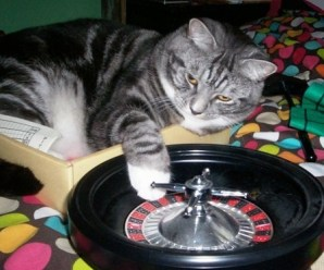 Ten Casino Cats Who Gamble Away All Their Owners Money