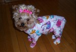 The World's Top 10 Best Images of Animals In Pajama
