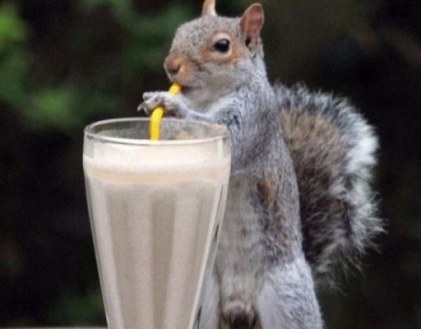 Squirrel using a drinking straw