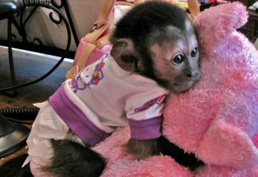 Monkey in Pajamas