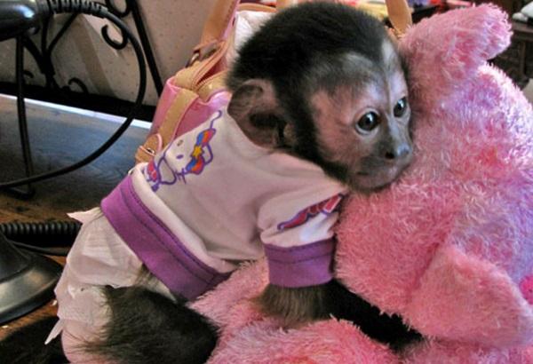 Monkey in Pyjamas