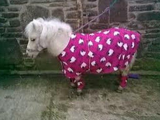 Horse in Pajamas