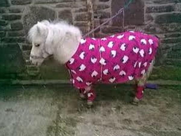 Horse in Pyjamas