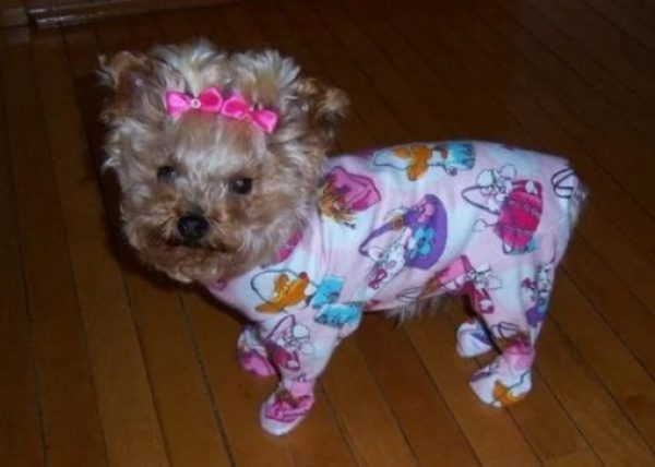 Dog in Pyjamas