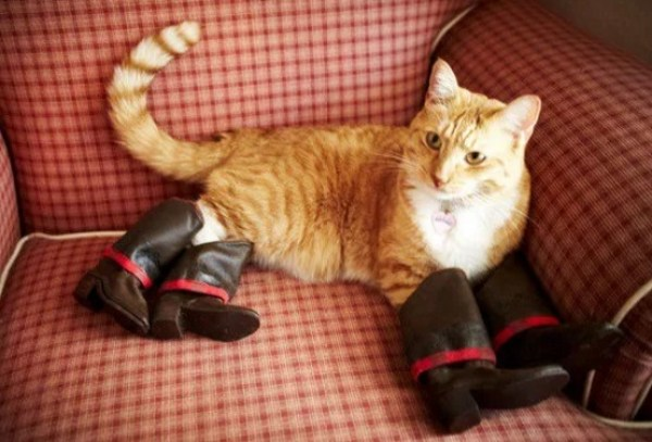 Cat Wearing Shoes