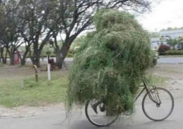 Bicycle Overloaded With Grass