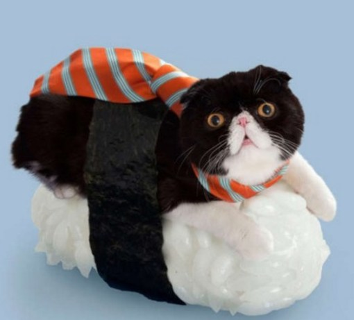 Cat Dressed as Sushi