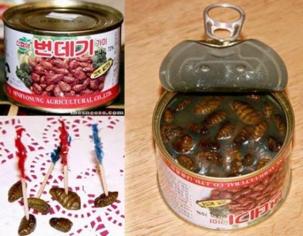 Can of Silkworm Pupae