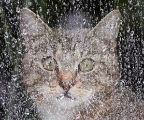 Ten Images of Cats Avoiding the Rain in Different Ways