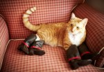 Top 10 Images of Cats Wearing Shoes