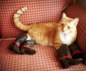 Ten Fashionable Cats Wearing Their Human Owner's Shoes