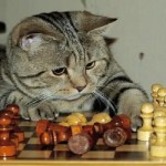 Ten Cats Playing Chess Who Could Easily Beat Garry Kasparov
