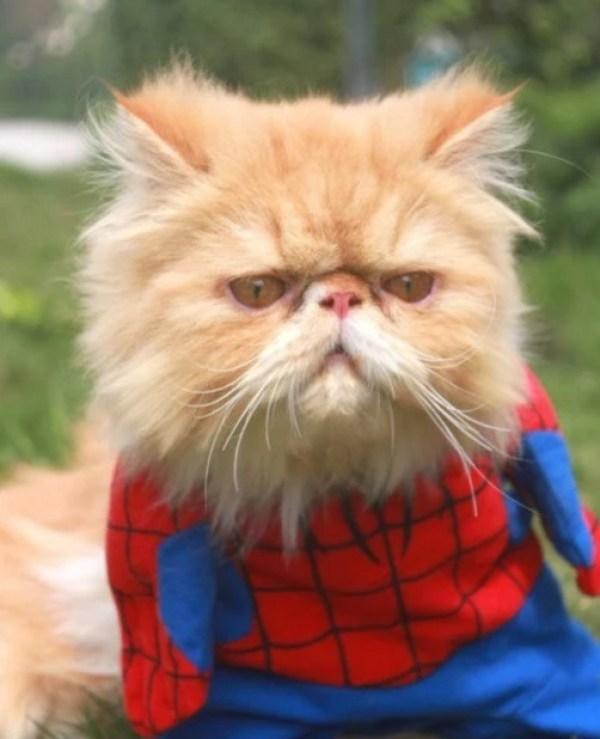 Cat Looks like Spider-Man