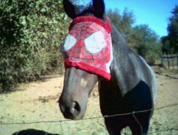 Horse Looks like Spider-Man