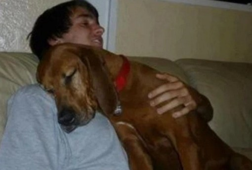 Dog cwtching, cuddling, hugging human
