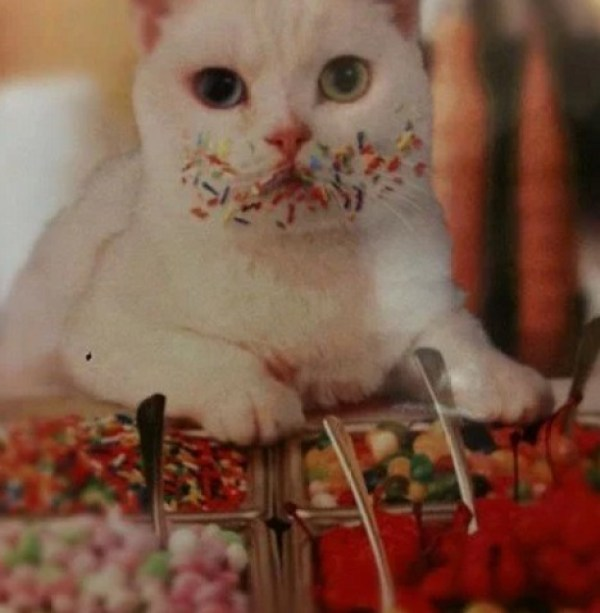 A cat that loves ice-cream toppings