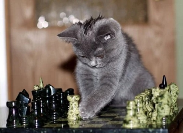 Cat Playing Chess