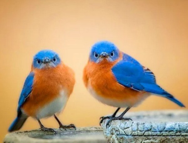 Identical Twin Birds