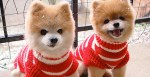 Top 10 Images of Identical Animals Twins