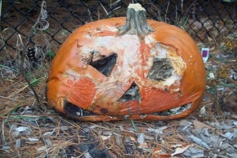 Ten Amazing Things You Can Do With Your Pumpkin After Halloween
