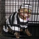 Ten Jail-bird Cats Behind Bars Who Probably Did Something Bad