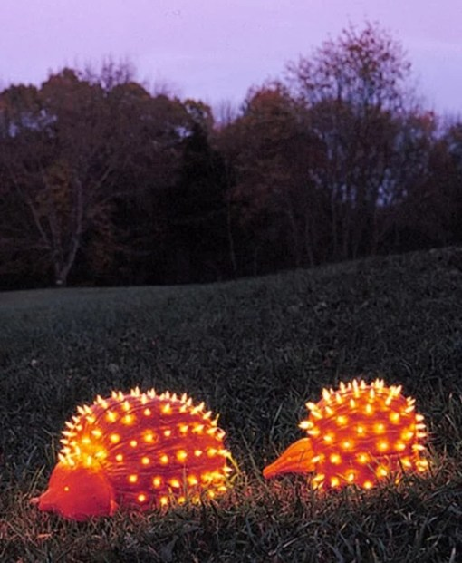 Pumpkin/Jack-o-lantern that looks a Hedgehog