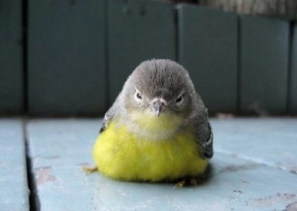 Grumpy Looking Bird