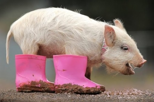 Top 10 Funny Animals Wearing Wellies (Wellington Boots)s