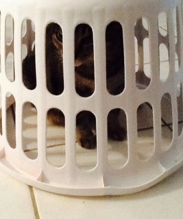 Cat Behind Bars in Prison / Jail