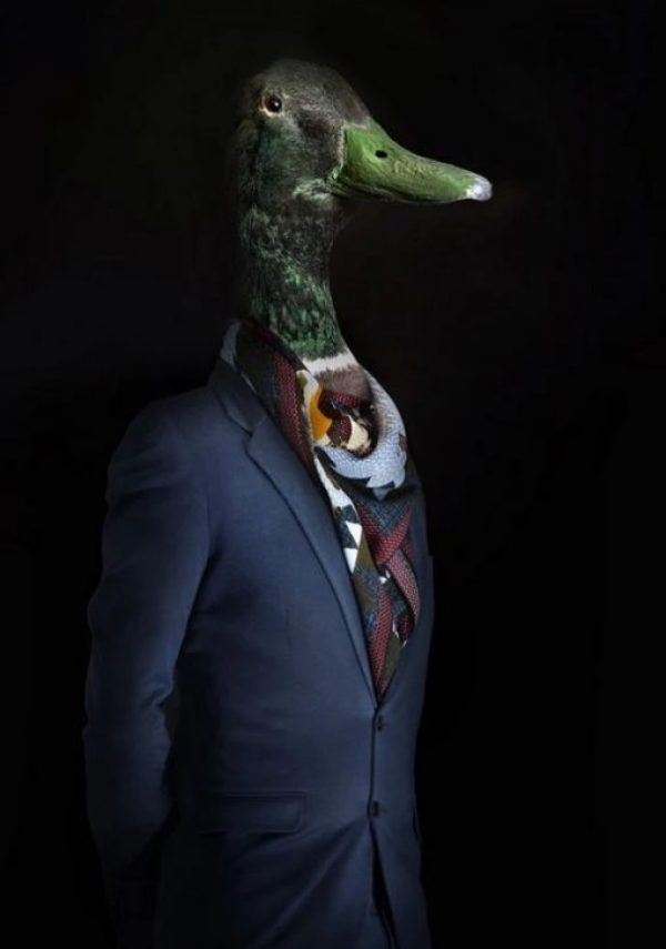 Duck Dressed in Latest Fashion