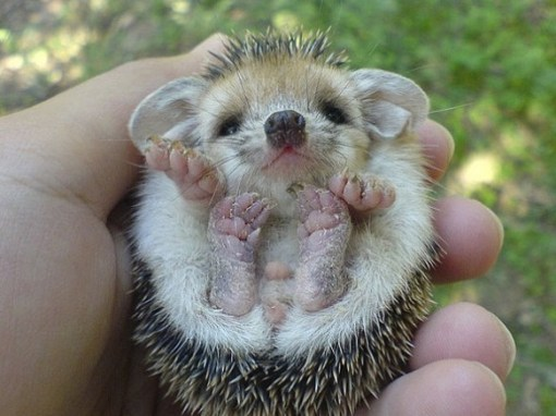 Top 10 Amazing Animals That Fit In The Palm Of Your Hand