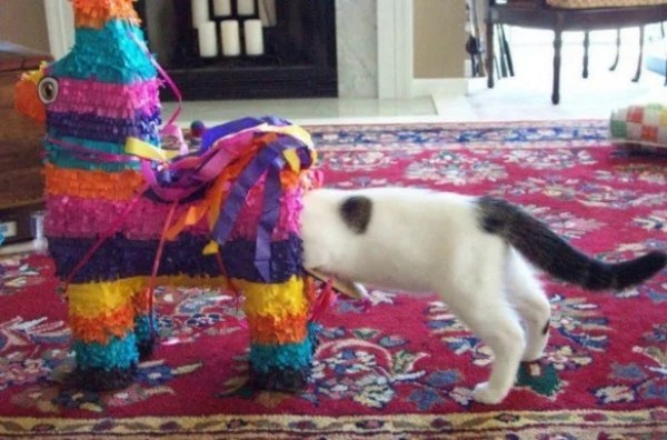 Cat stuck in a pinata