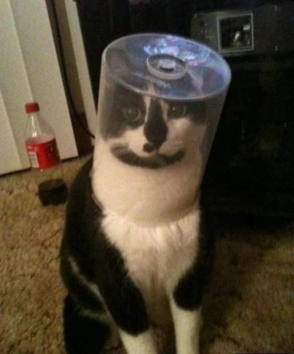 Cat stuck in a disk spindle case