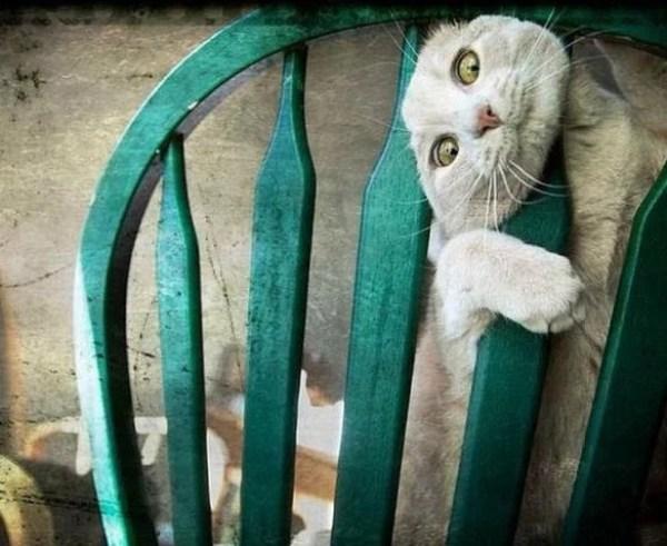 Cat stuck in a chair