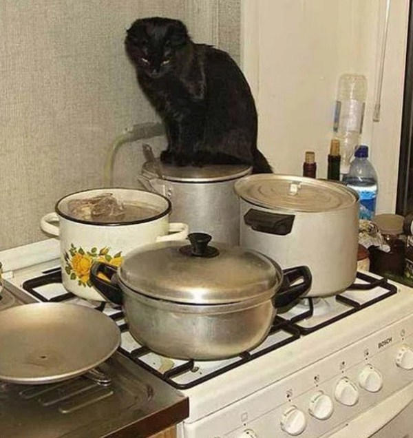 Cat Cooking
