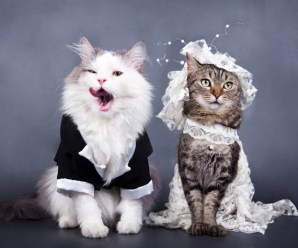 Ten Cats Getting Married in the Traditional Style