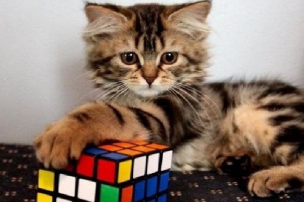 Ten Puzzle Solving Cats Who Love Playing With Rubiks Cubes