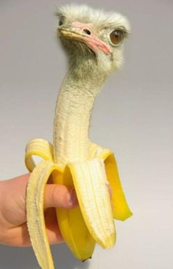 Photoshopped Banana Made to Look Like an Ostrich