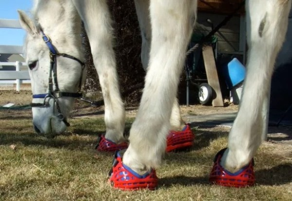 Horse Wearing Shoes