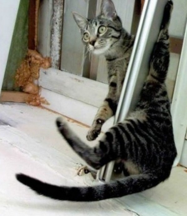 Pole Dancing Cat