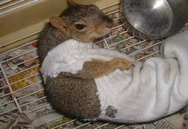 Squirrelwearing asock