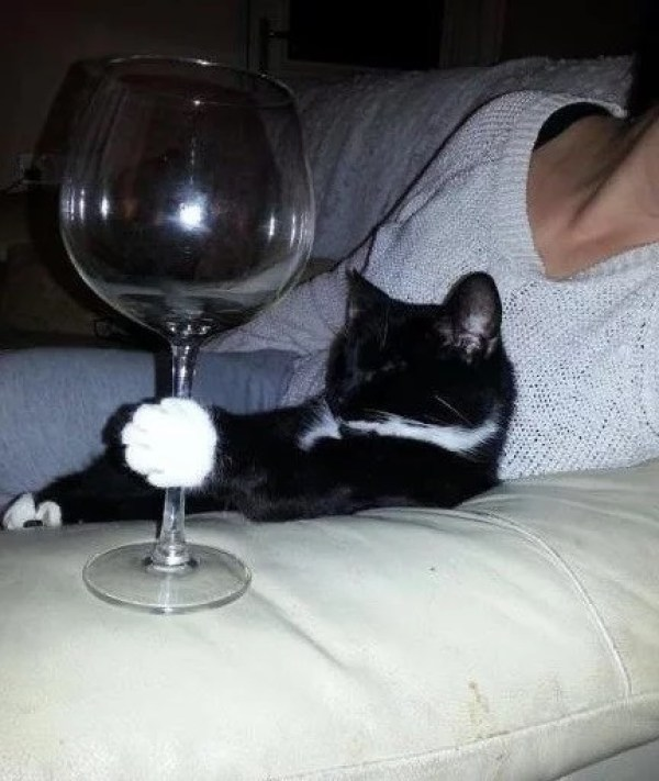 Cat Drinking Wine