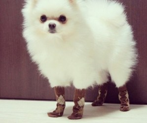 Ten Funny Pictures of Animals Wearing Socks